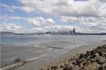 A view of downtown Seattle. Orin Blomberg/Flickr