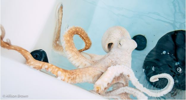 my heart is octopied by octopuses and yours should be too