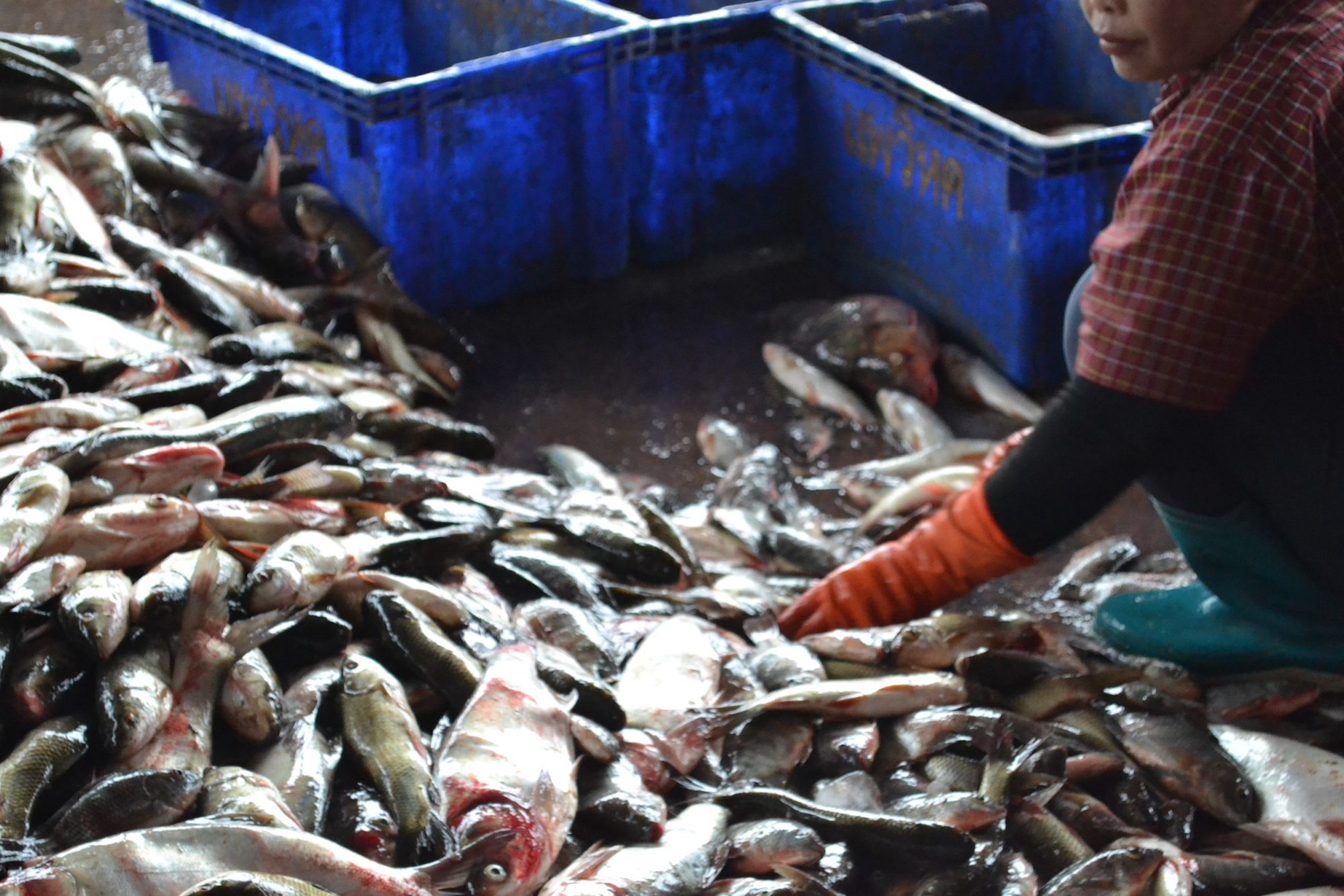 Women in Stem Part 2: Bringing Visibility to Women in Fisheries