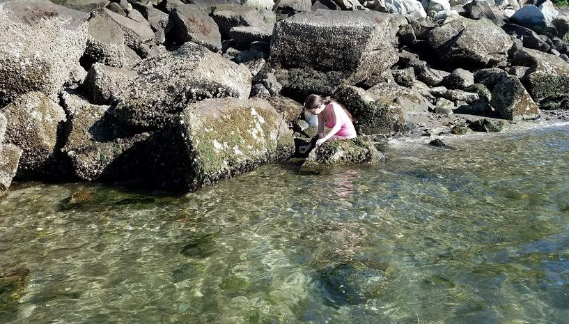 SMEA student Stephanie Wolek is crouched in clear, shallow water alongside a rocky coastline. Boulders of various sizes are spread along the shore.