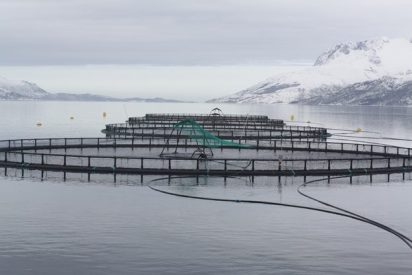 Four net pens protrude from the water with snow covered hills in the background. The water surface is calm and flat.
