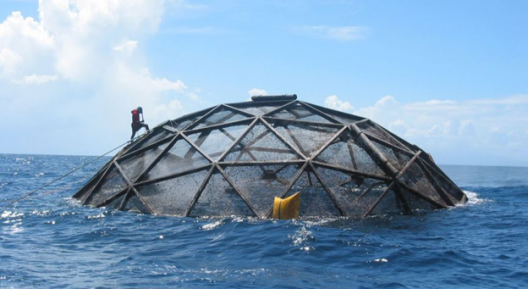 A large sphere made of metal and netting protrudes from bright blue water. A person is climbing on near the top of the sphere wearing a red life jacket.