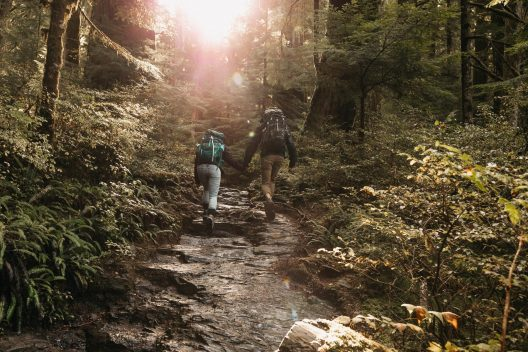 Two hikers each wearing a backpack and holding hands as they walk are walking away from the photographer. The inclined trail is muddy and rocky, with ferns, shrubs, and large evergreen trees on either side. The sun is beaming through the trees obscuring some of the image.